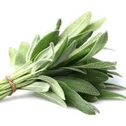 Sage Leaf Extract 鼠尾草